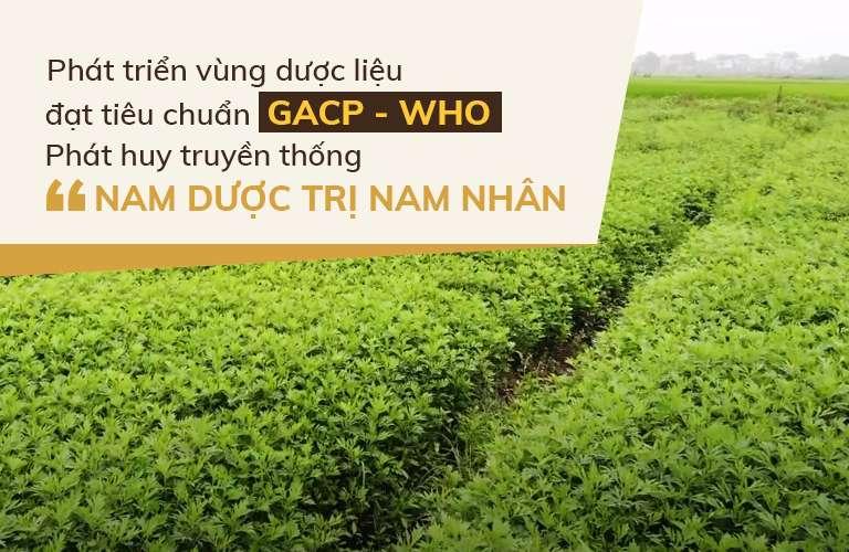 Cam kết thảo dược sạch từ tự nhiên, đạt tiêu chuẩn GACP-WHO